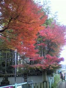 uemori-2011-12-03T17-04-14-1